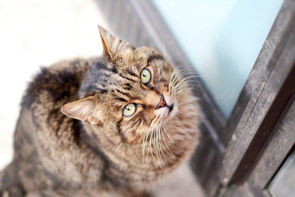 Zugelaufene Katze will nicht mehr weg: Das kannst du tun