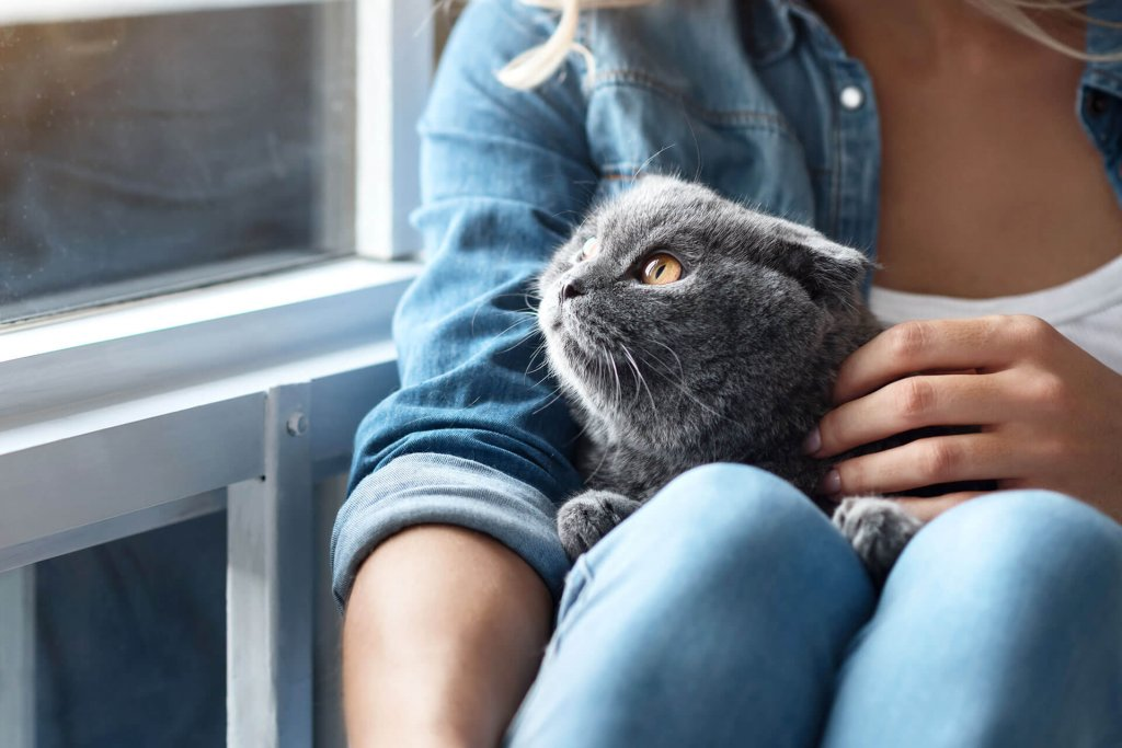First time cat owner? Here are 10 things you need to know - Tractive
