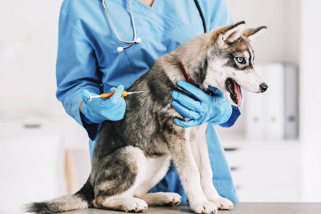 GPS-implant-in-dogs-versus-GPS-trackers
