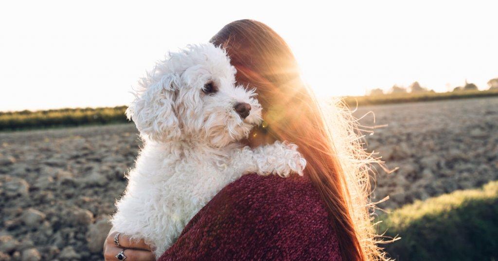 Hund vermisst so findest du deinen Hund wieder