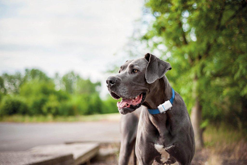 Finde jetzt den besten GPS Tracker für deinen Hund