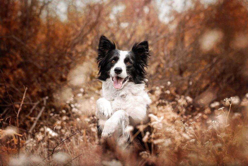 Kann man dem Hund den Jagdinstinkt abgewöhnen?
