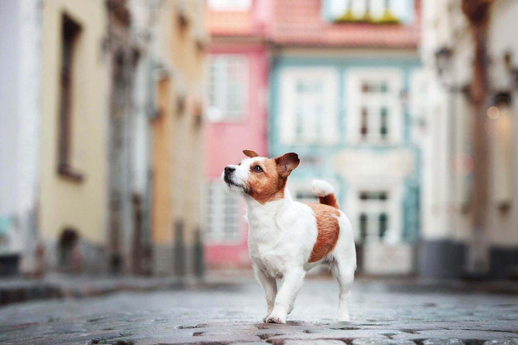 Hund vermisst in Berlin