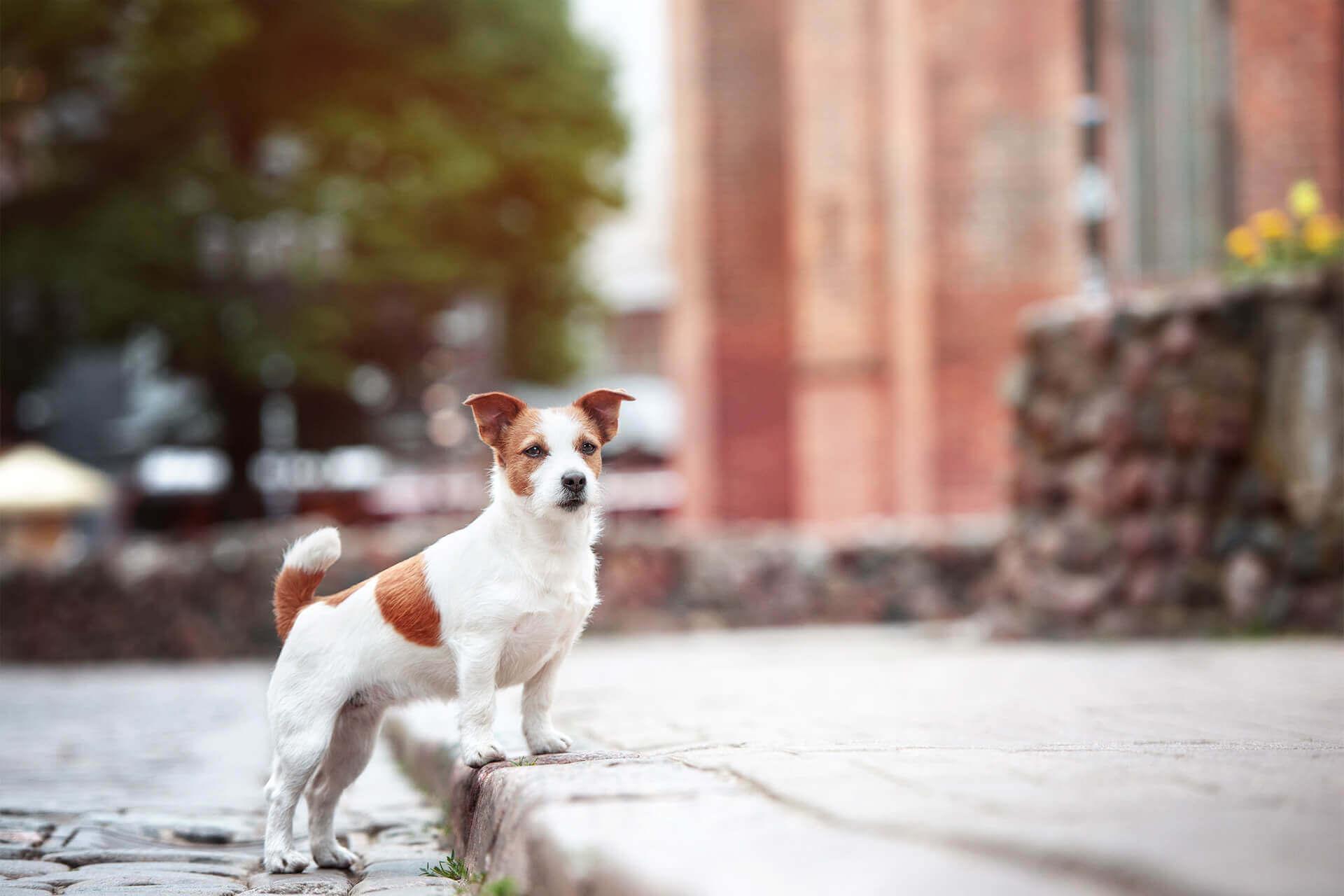 Lost dog Cardiff