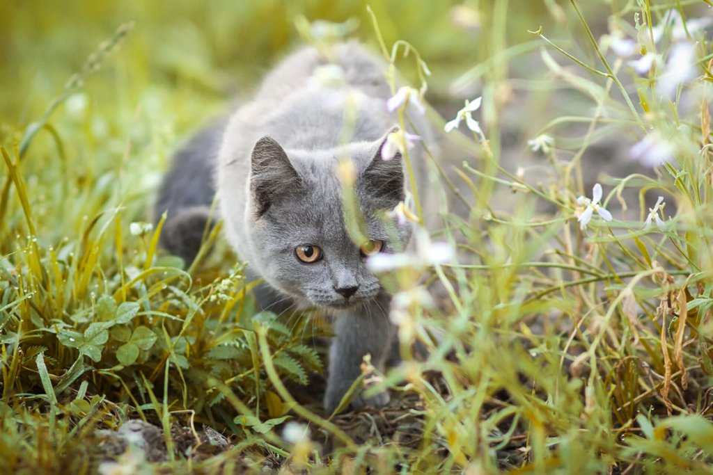 Pollenallergie bei Katzen - das sind die Symptome
