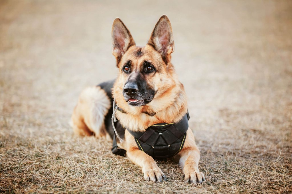 how do working dogs benefits from Tractive GPS Trackers