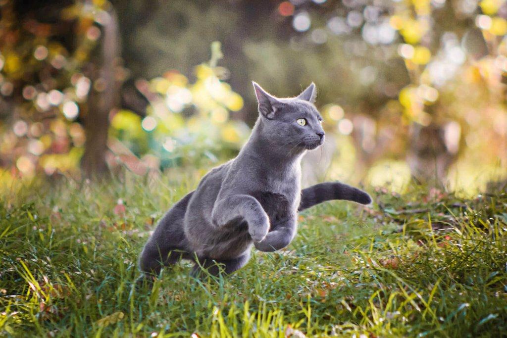Katze vermisst - das musst du jetzt tun
