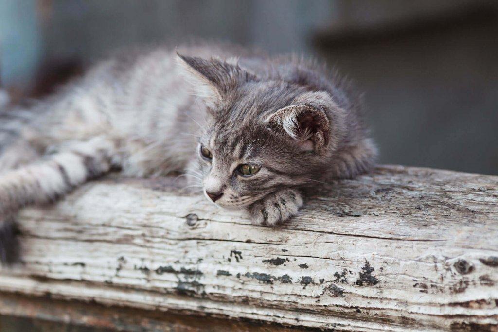 Katze gefunden: Das musst du jetzt tun