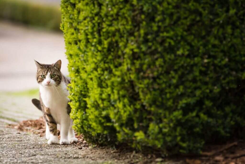 Katze vermisst? So findest du sie wieder und sorgst für die Zukunft vor!