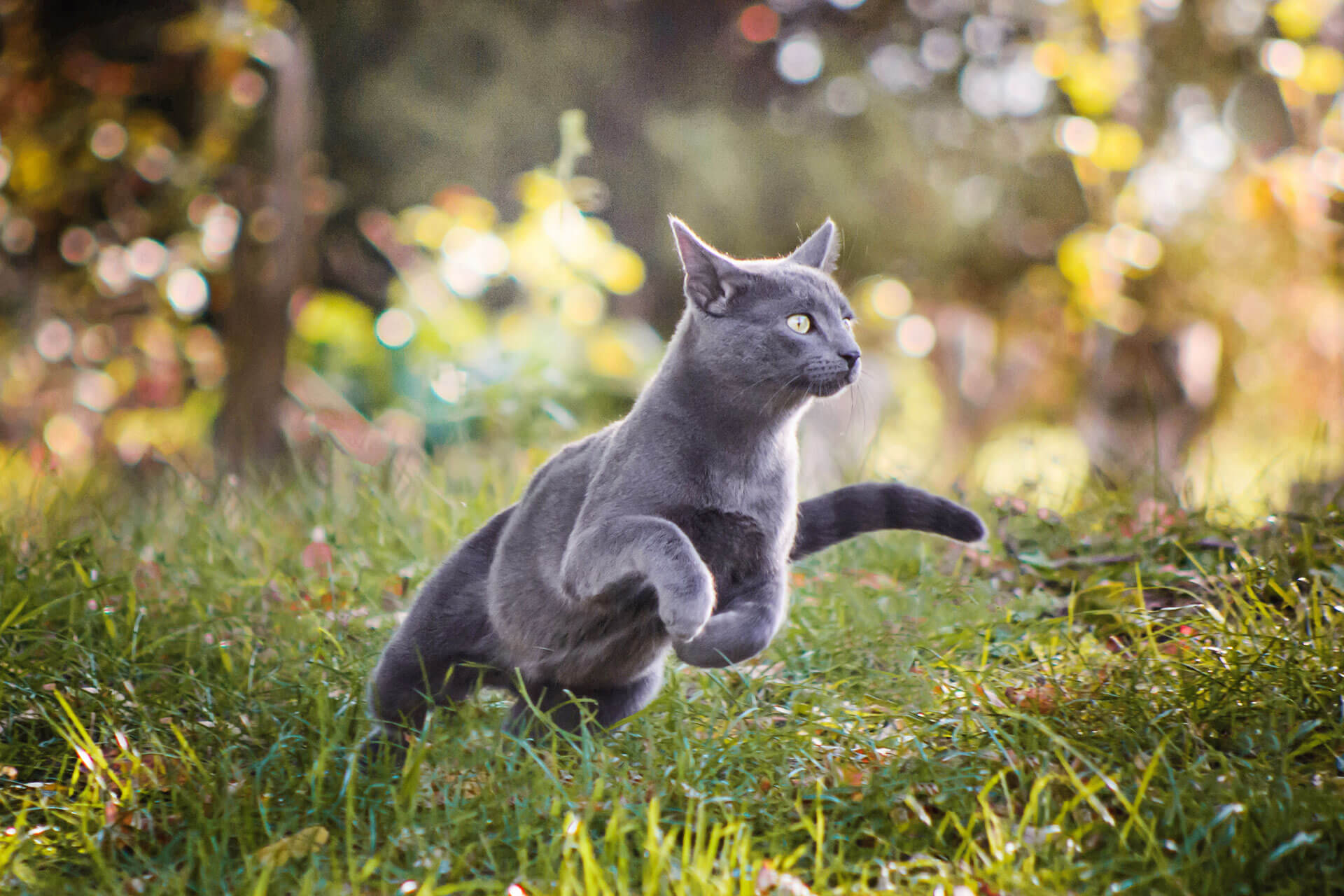 Why do cats run away? 11 reasons and how to deal with it
