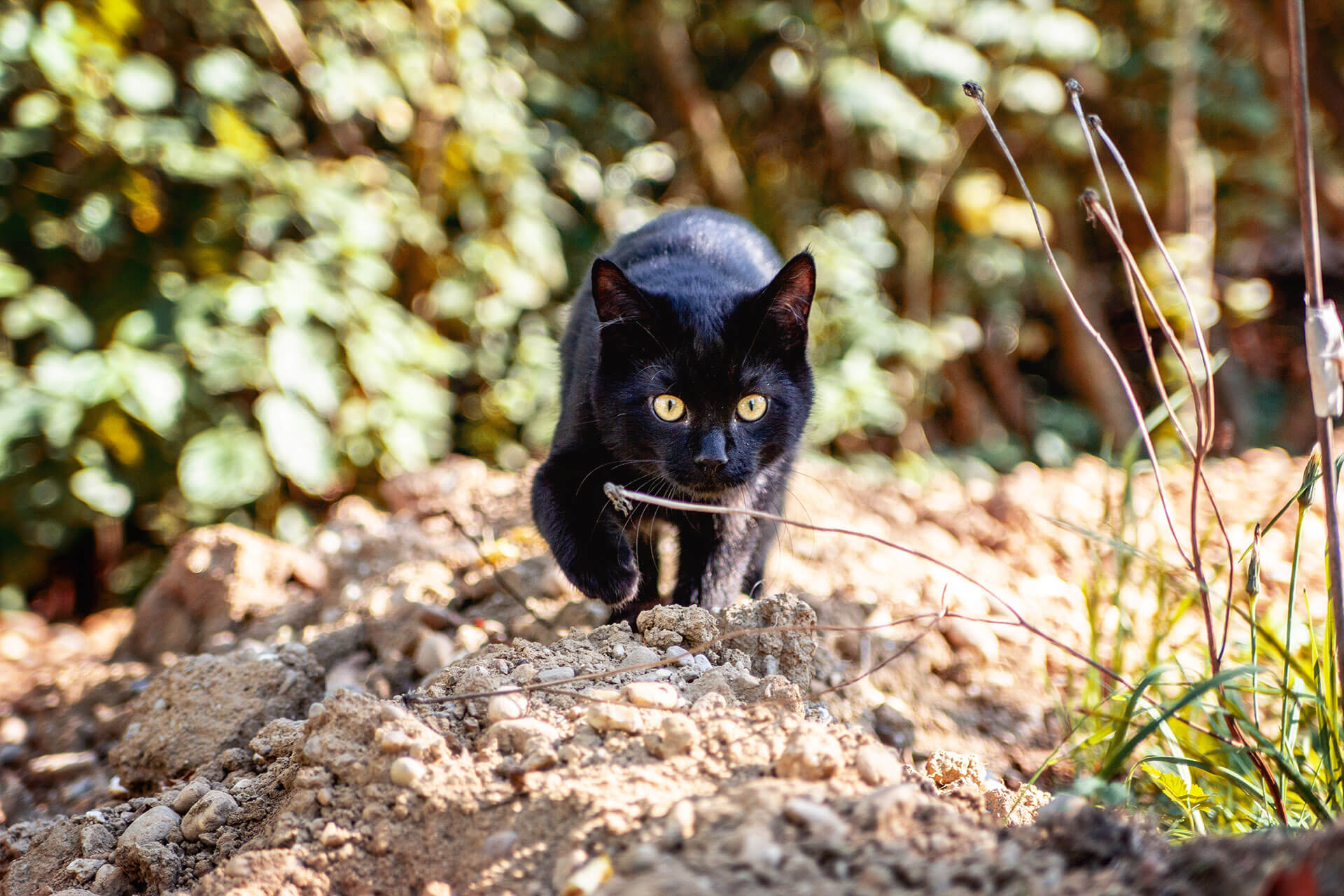 what to do when your cat is running away from home