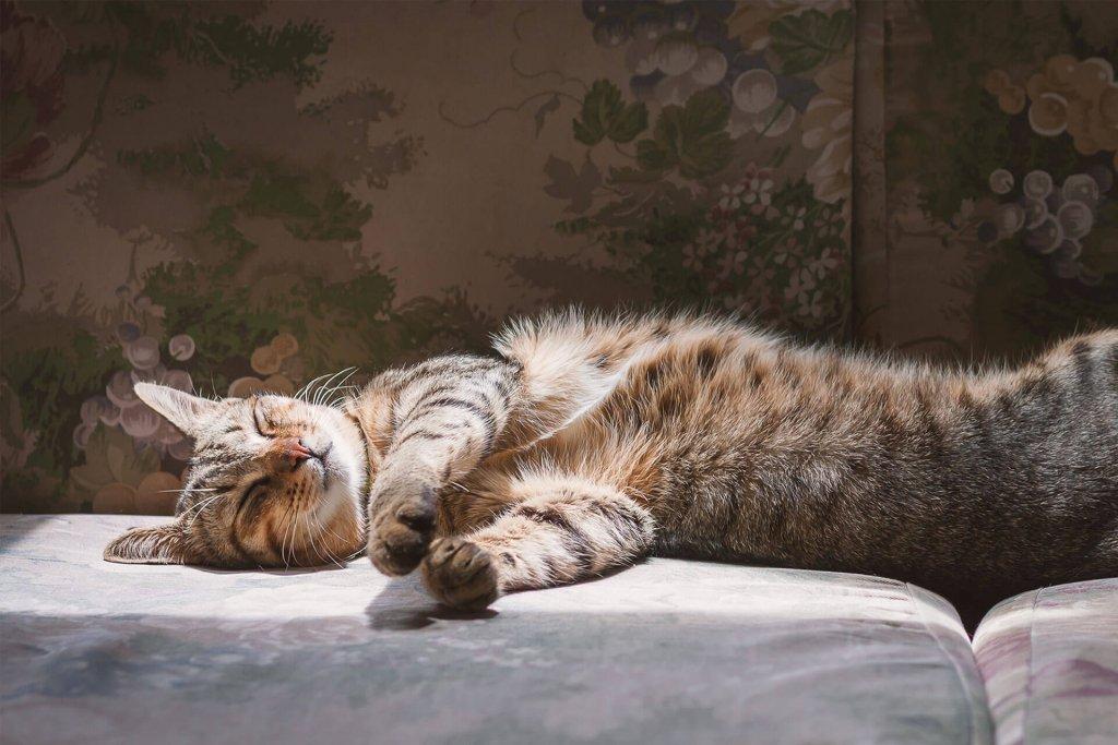 wann sind katzen am aktivsten