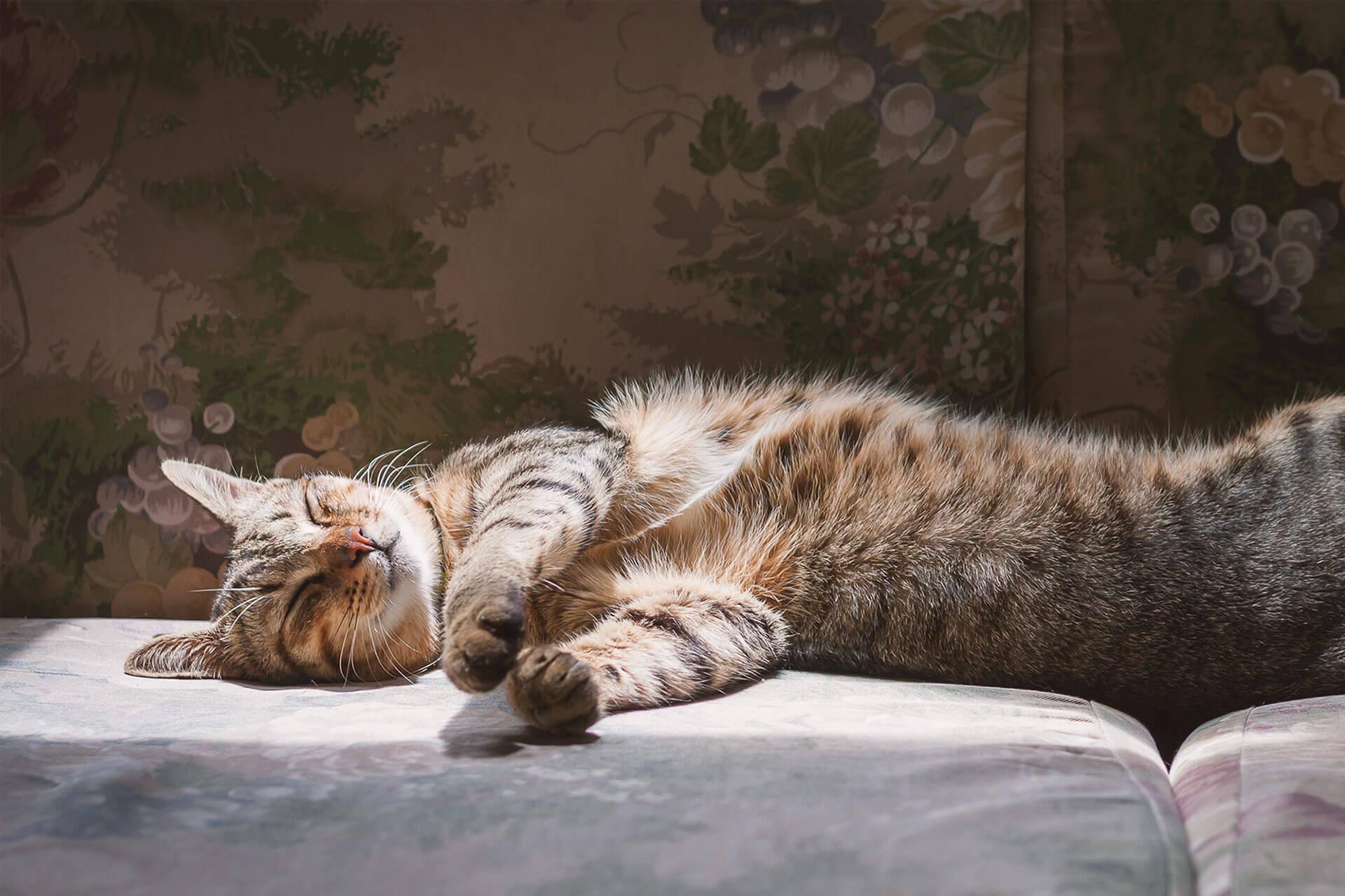 Wann sind Katzen am aktivsten und wie viel Schlaf brauchen sie?