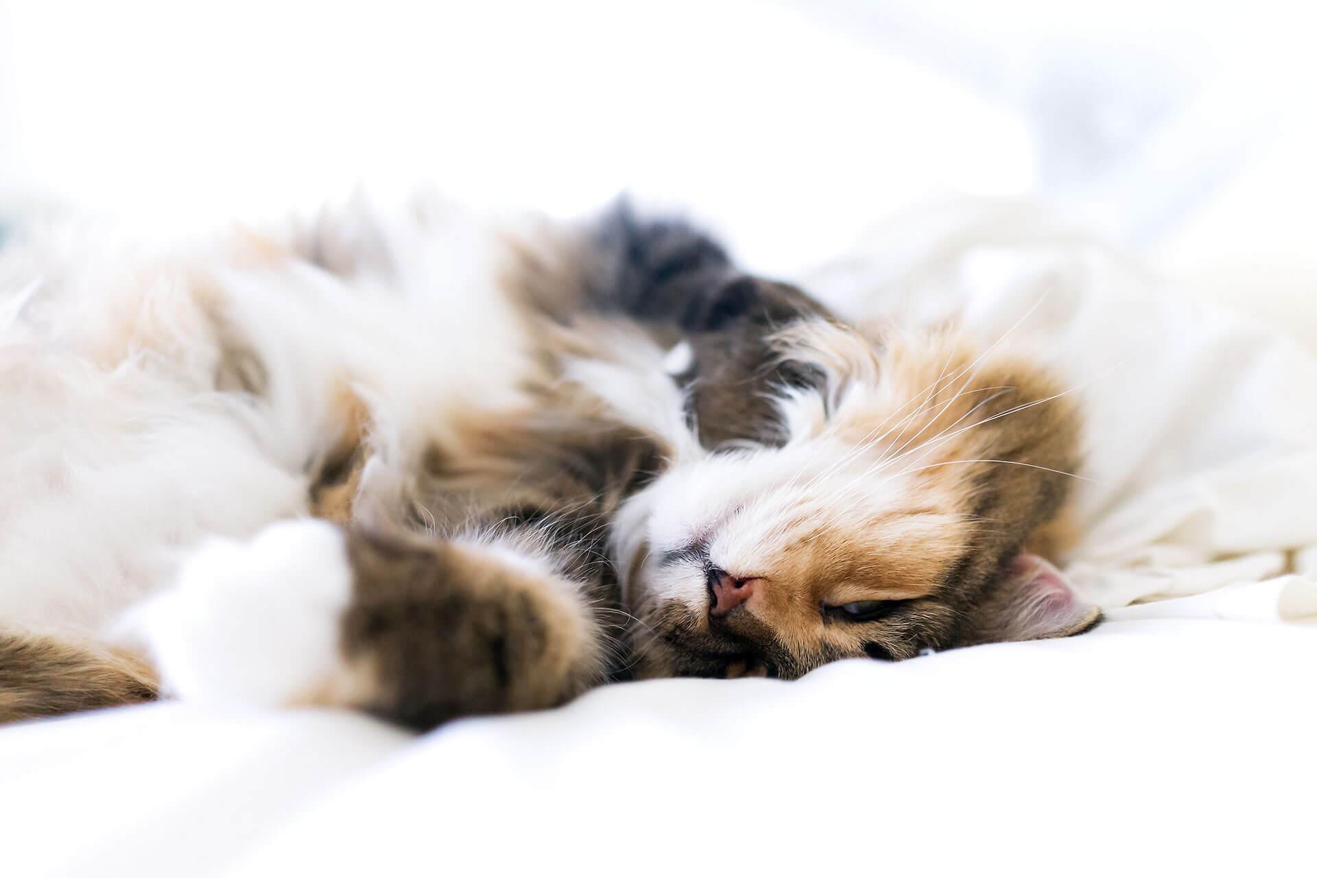 Katzenkrankheiten-Symptome-und-Behandlung