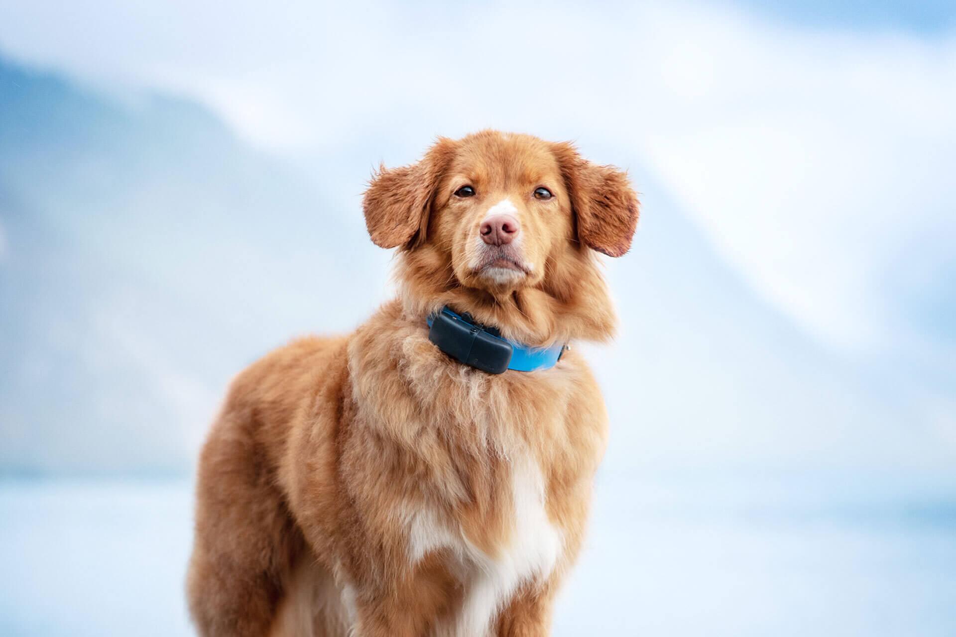 dog gps tracker on dog