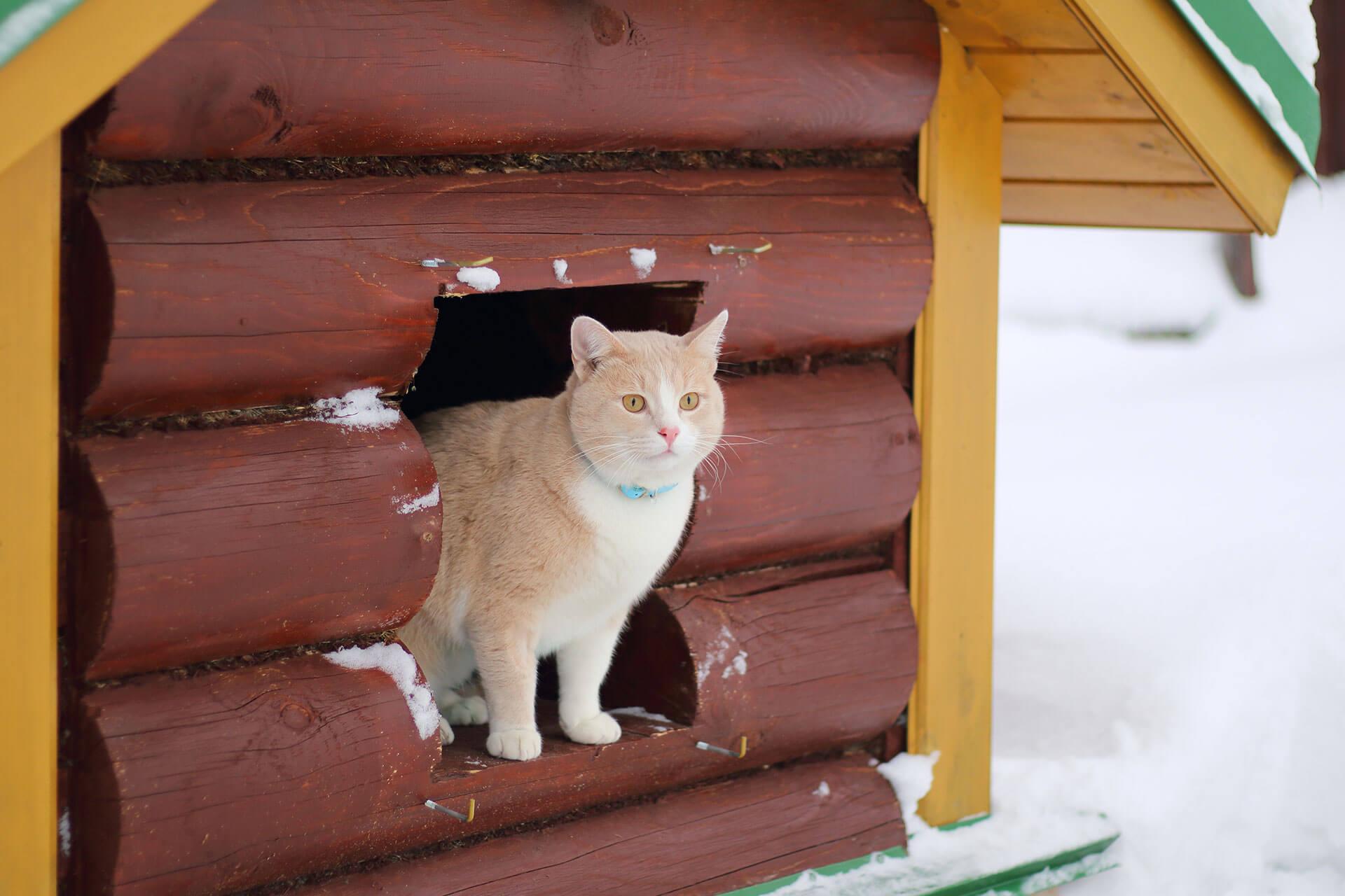 Thermo Hütten im Winter für Freigänger-Katzen im Winter