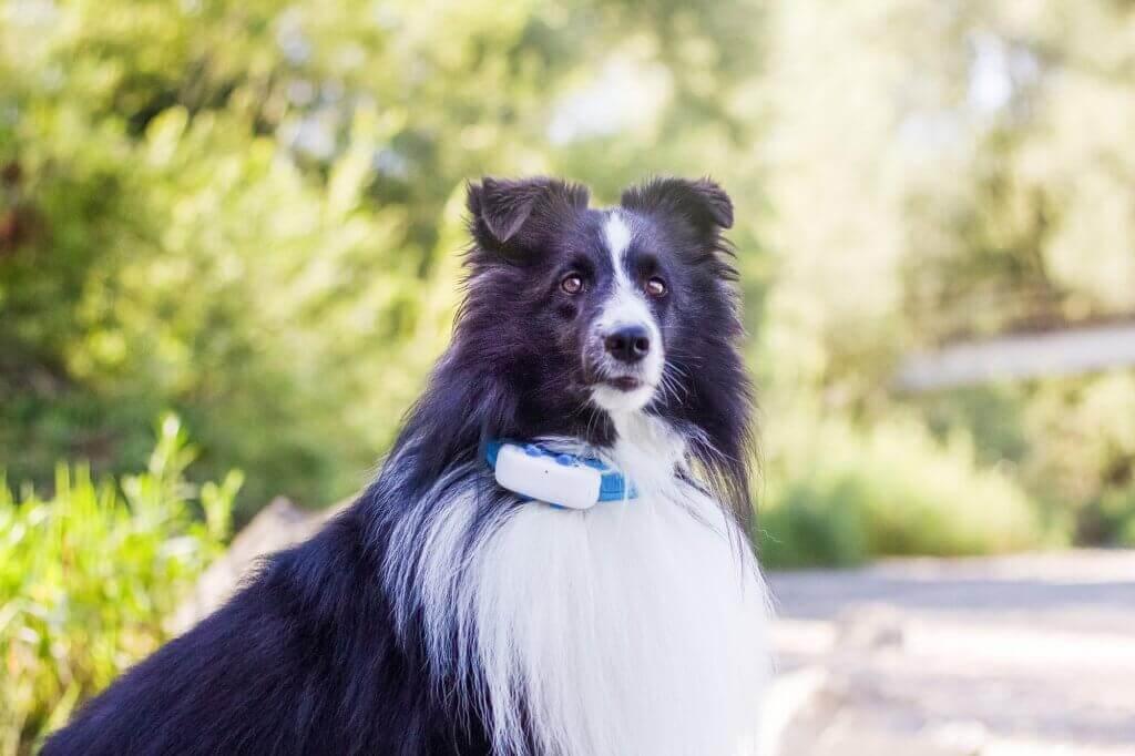 Perro con chip gps para perros