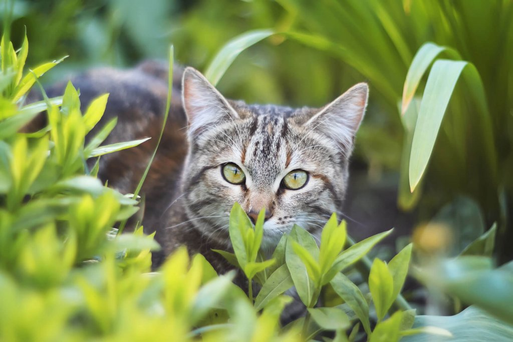 5 Benefits and disadvantages of an outdoor cat