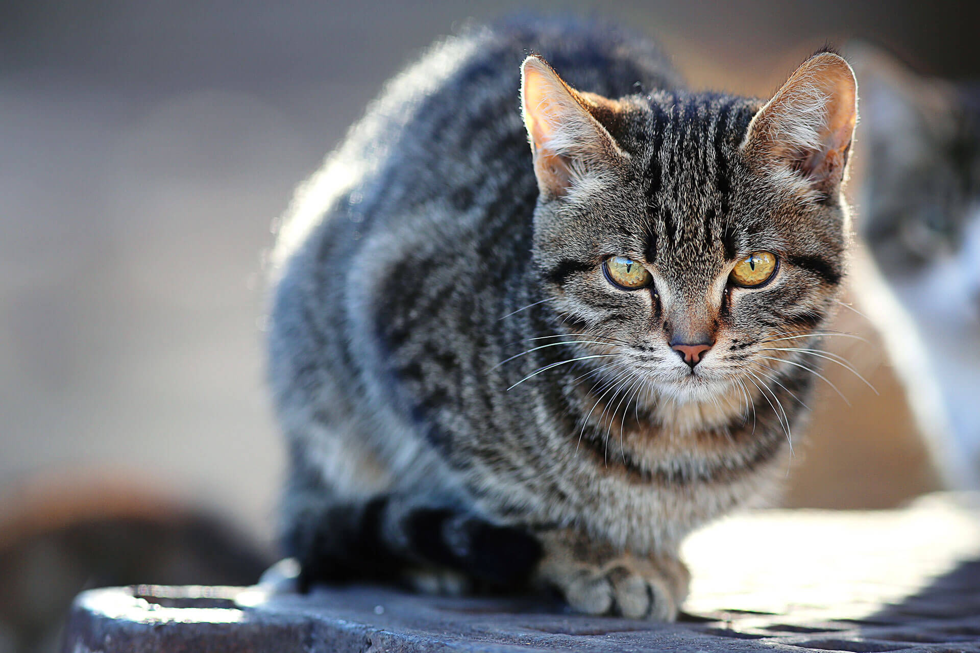5 benefits of an outdoor cat