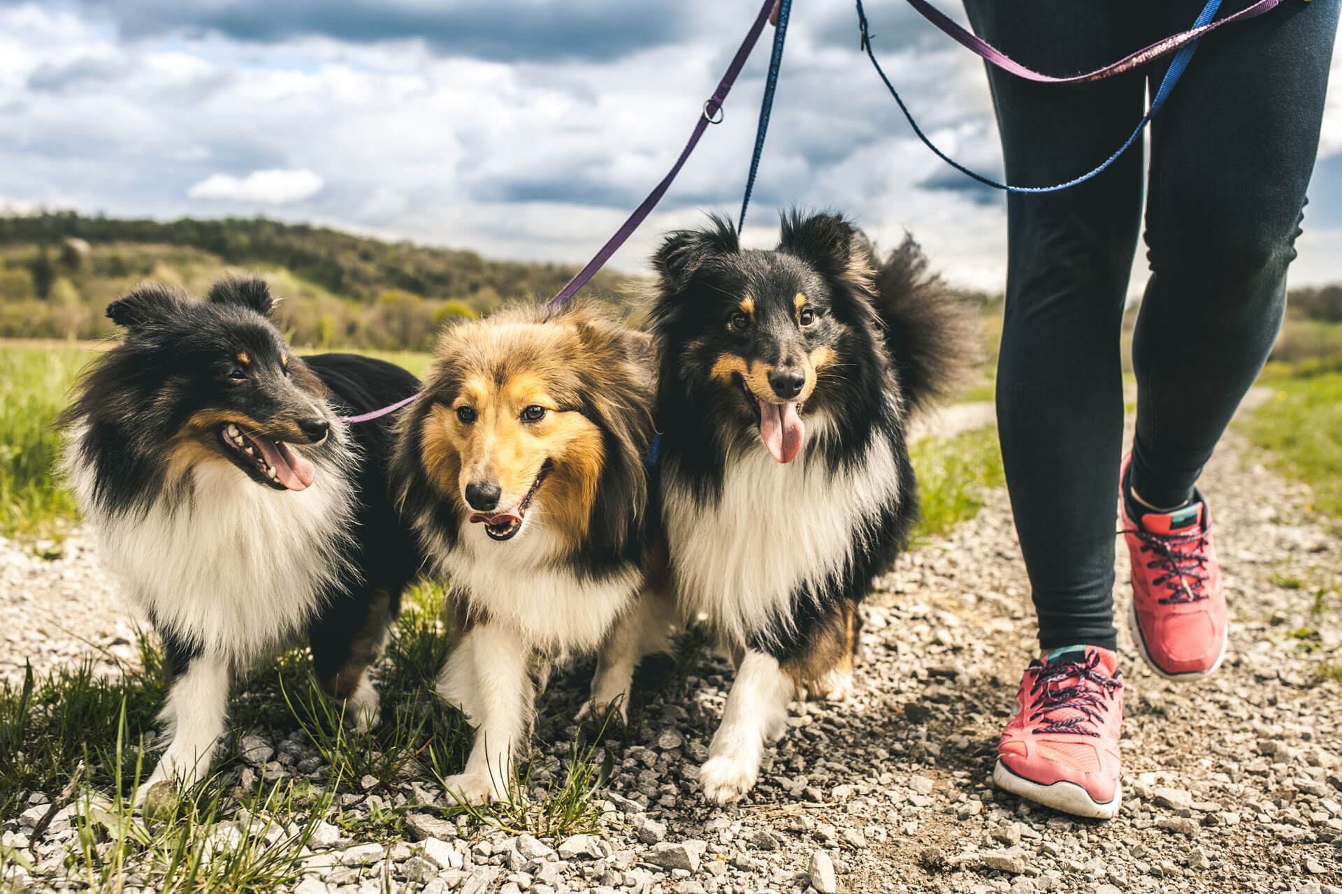 How to Become a Next-Level Dog Walker