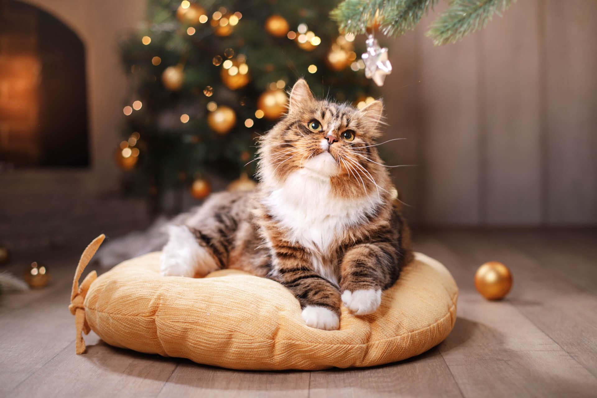 Die 6 besten Geschenke für Katzenliebhaber 2019