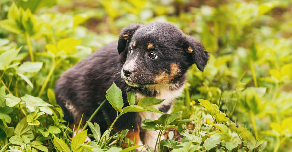 Fearful dogs: our expert reveals everything you need to know