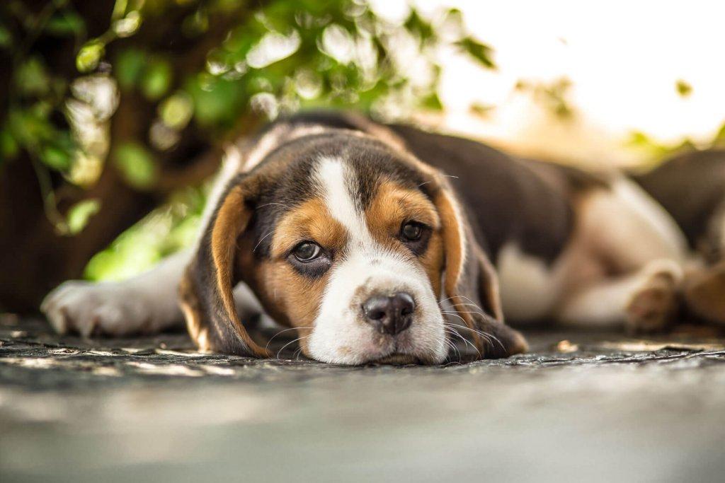 Tierbestattung wenn Haustiere über die Regenbogenbrücke gehen