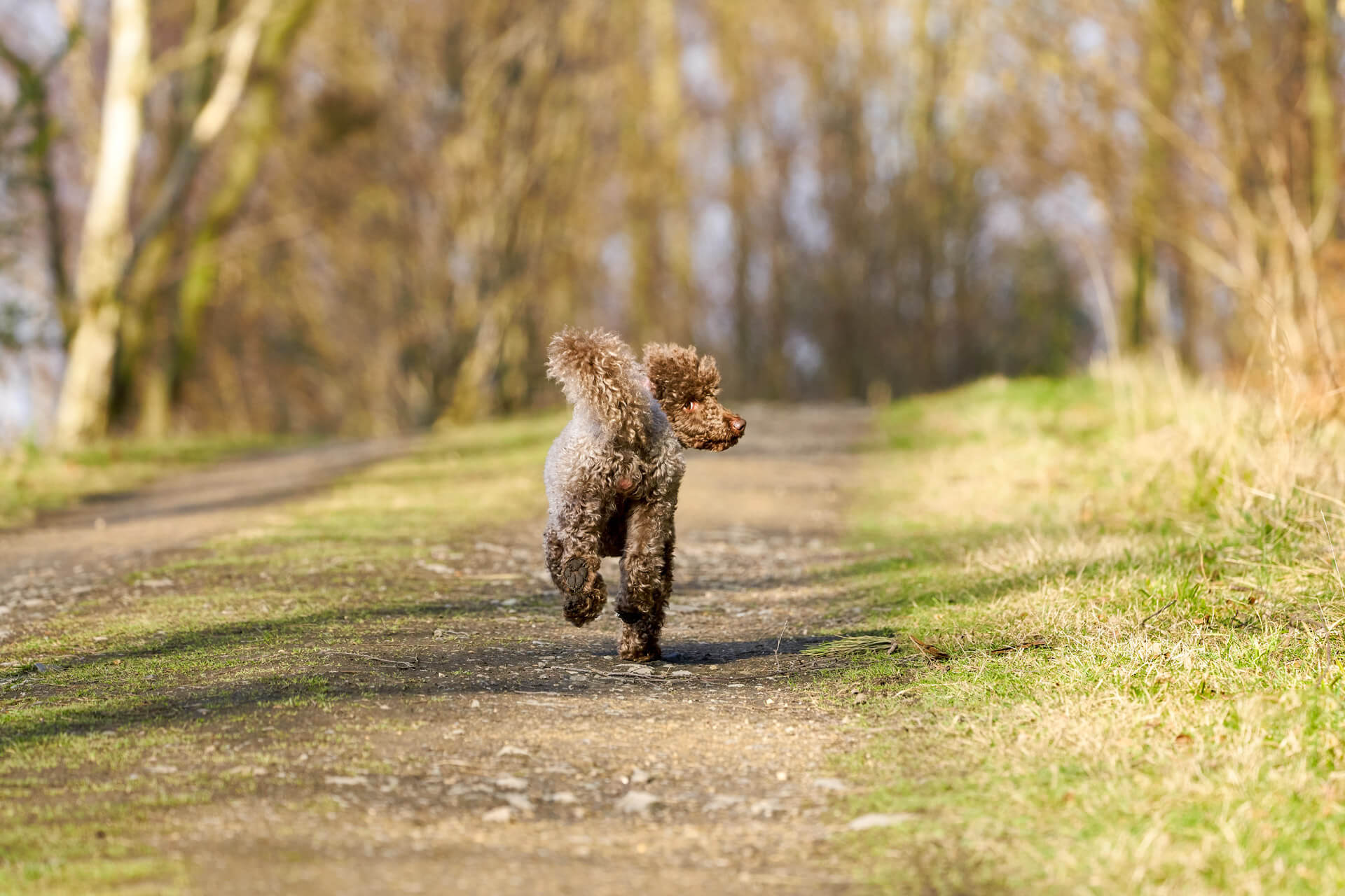 How To Find A Lost Dog: 8+ Tips To Bring Your Missing Dog Home Fast