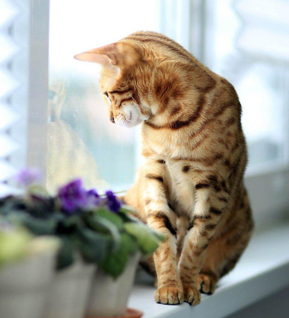 Katze auf Fensterbank neben Blumentöpfen