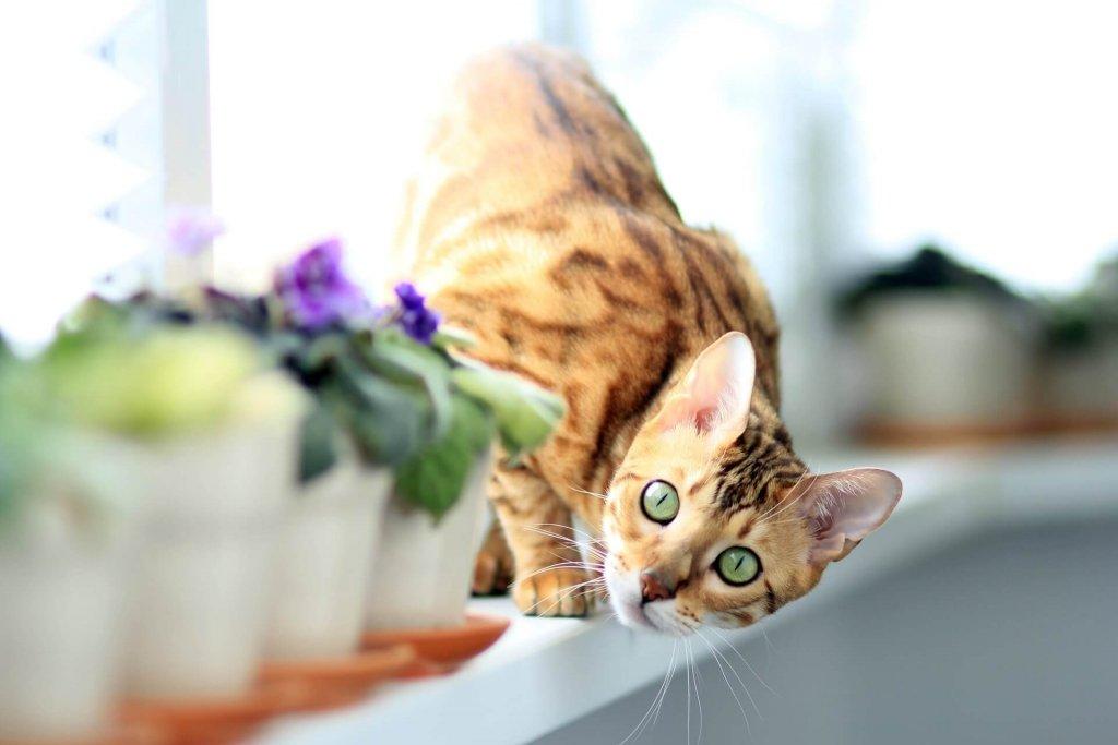Katze sitzt hinter Blumentöpfen auf Fensterbrett