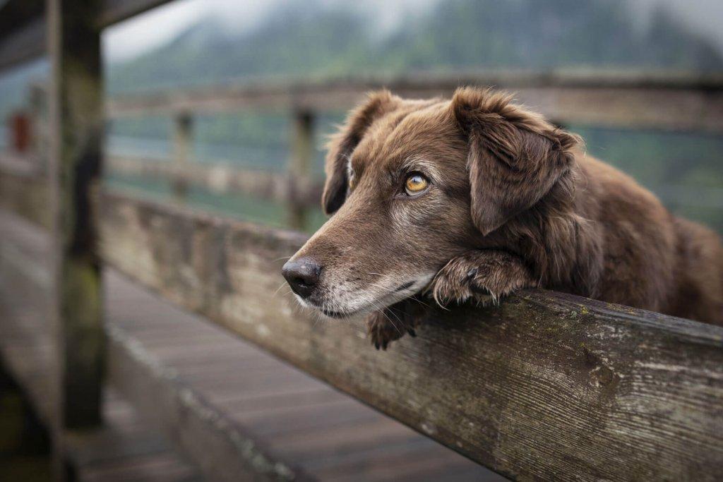 Understanding seizures in old dogs