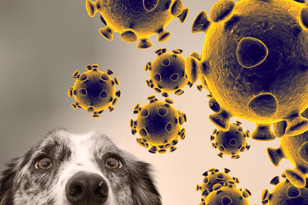 Hund und Coronaviren