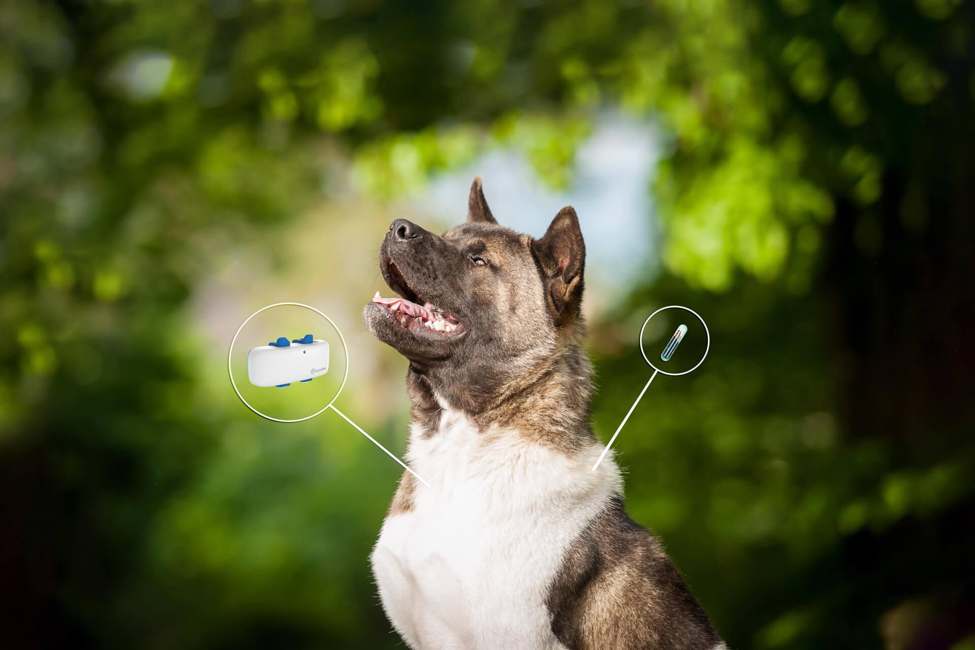 Hund chippen? Das ist der Unterschied zwischen Hundechip und GPS Tracker