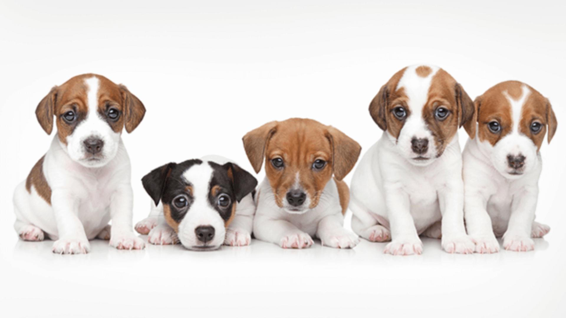 Responsibility Puppy Box
