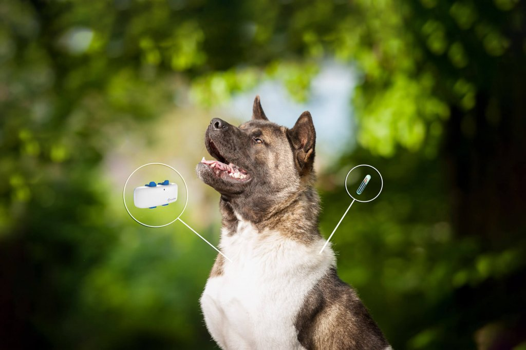 dog gps tracker chip differences illustration