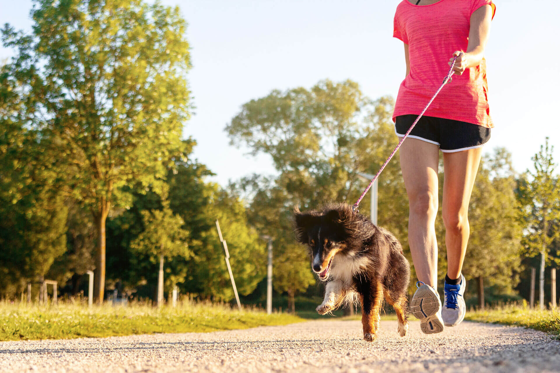 The ultimate guide to dog obesity, fitness and activity monitoring