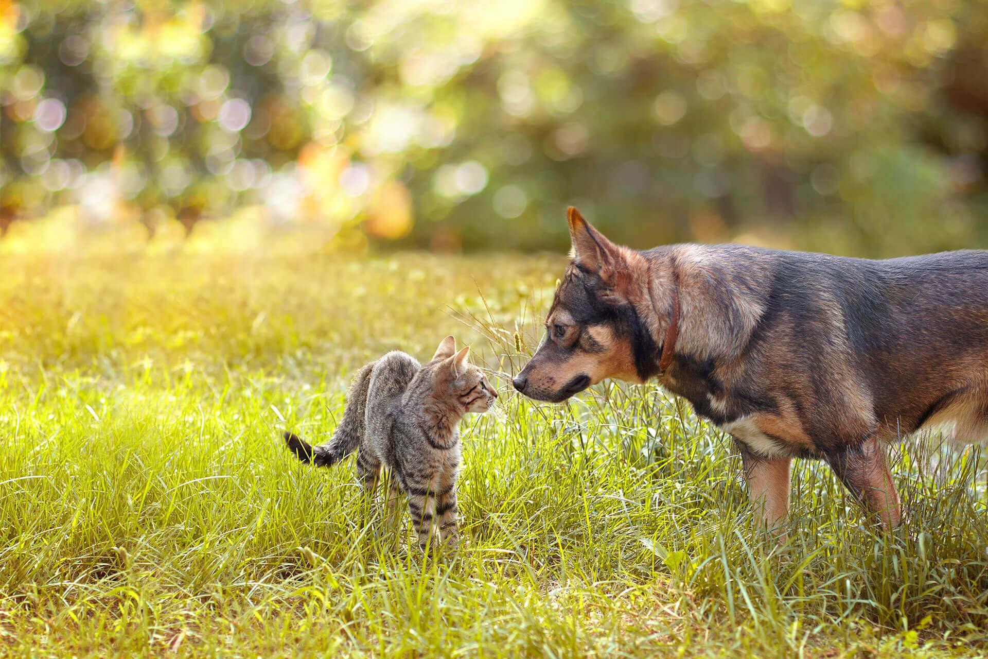 Hund und Katze beschnuppern sich auf der Wiese