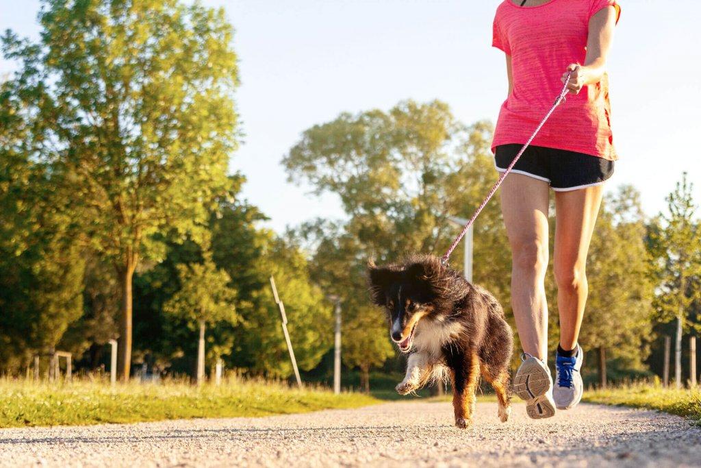 sportliche Frau und Hund laufen im Freien
