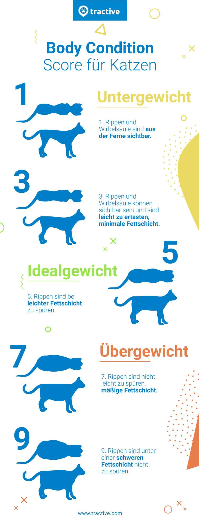 Body Condition Score Gewichts-Skala 1-9 für Katzen - Katze Übergewicht