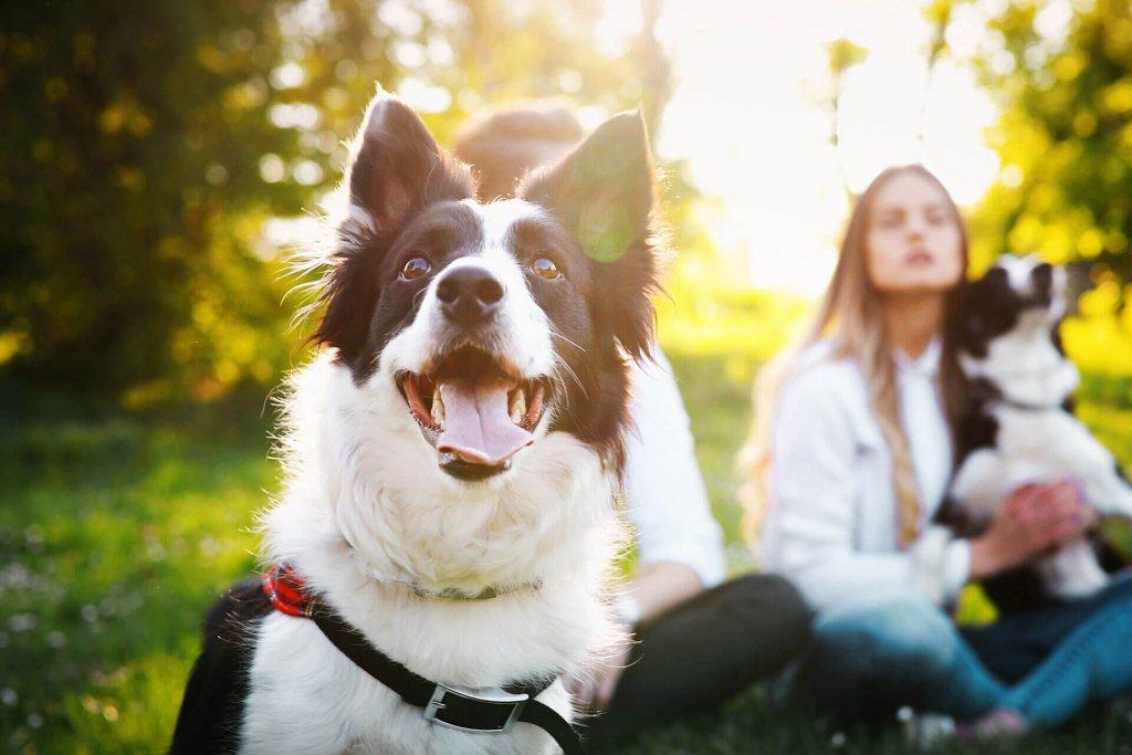 Welthundetag - tag des hundes