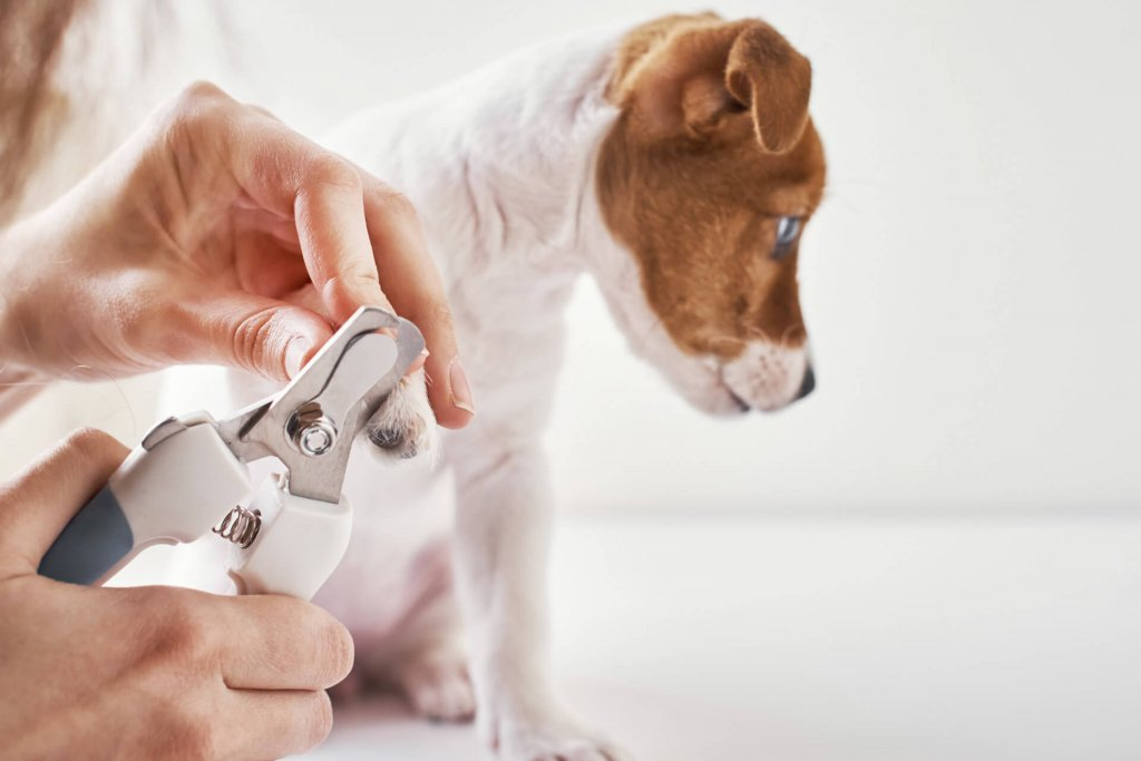 Person trimming dog nails white dog nail clipper