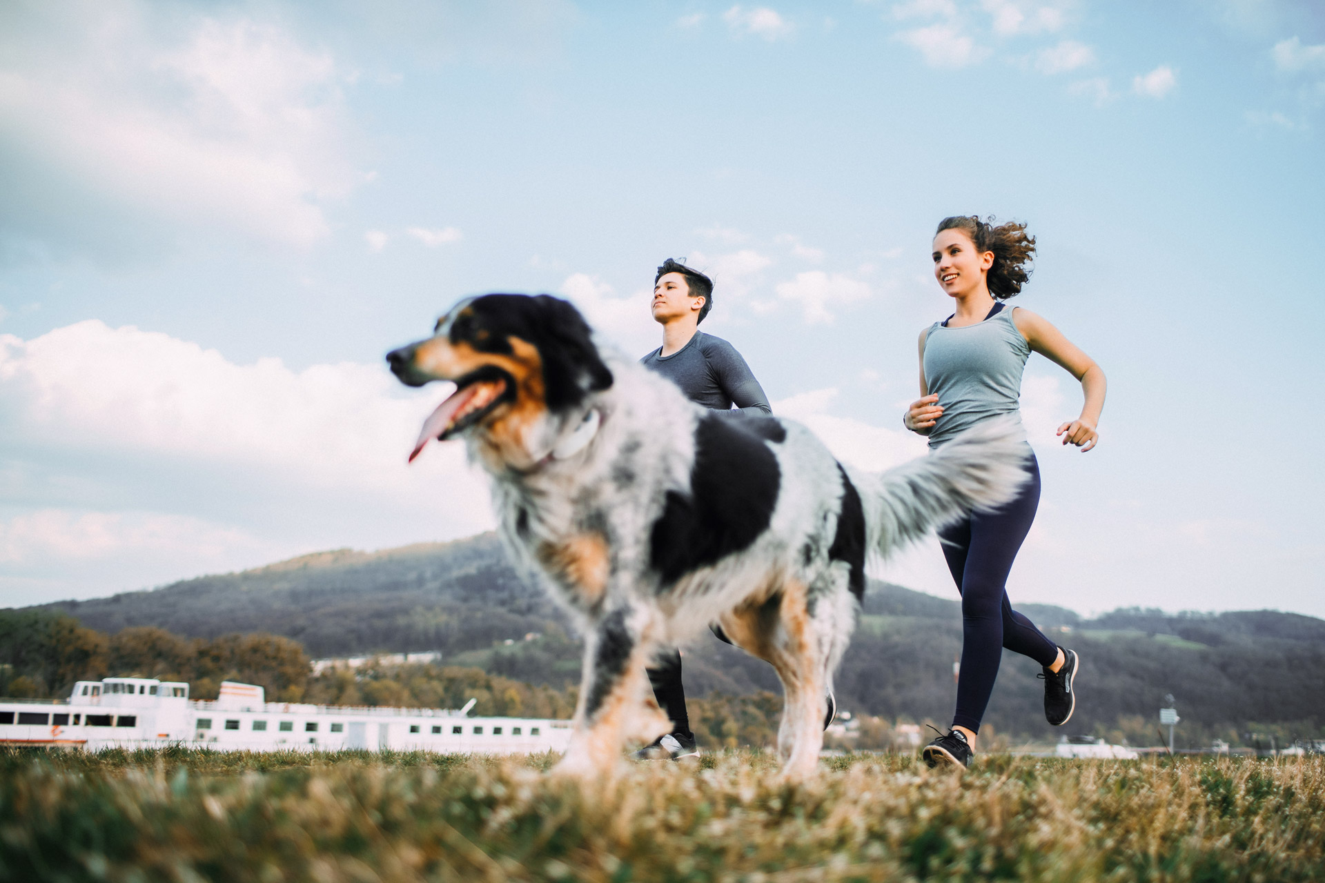 Zwei joggende Menschen laufen mit dreifärbigem Hund durch die Natur