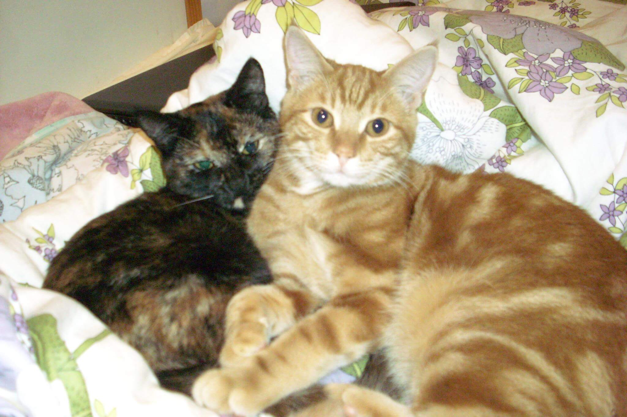 Zwei Katzen auf Kissen und Decken, die sich aneinander schmiegen