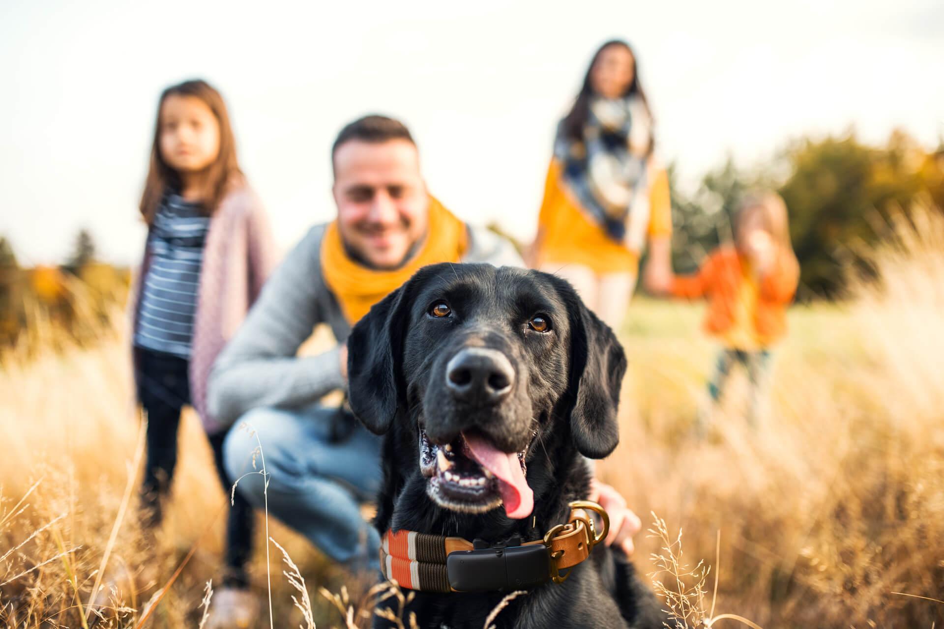 We are family: Tractive ist familienfreundlichster Arbeitgeber 2020