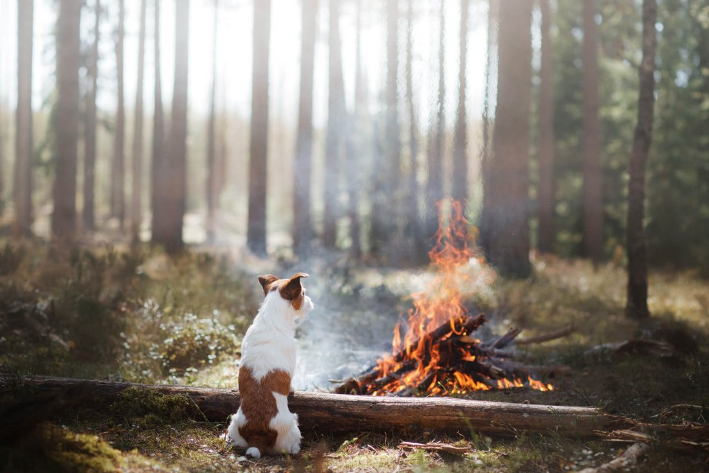 dog and bonfire in forest on bonfire night
