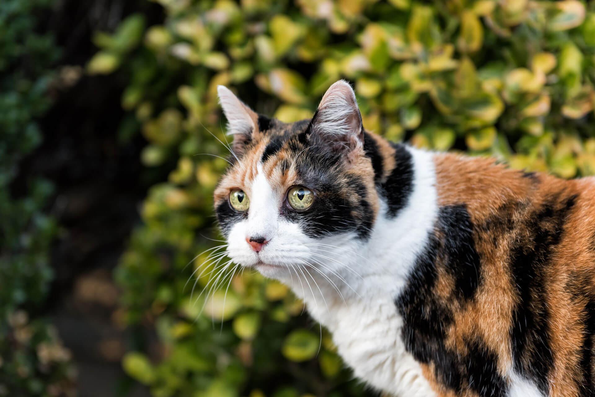 Katze rollig? Diese Anzeichen solltest du beachten