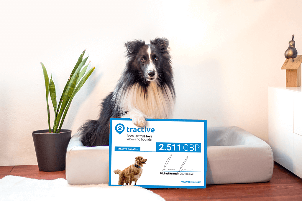 Tractive donates sales to help dogs find homes on World Animal Day