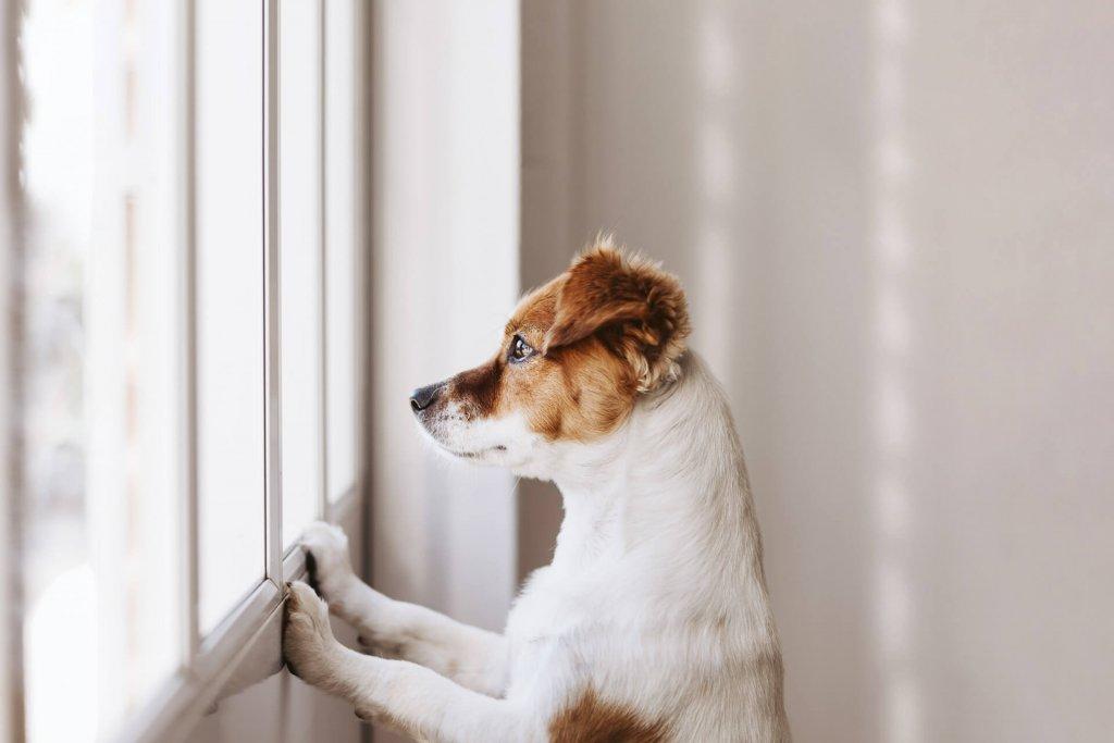 Demenza senile nei cani: sintomi, trattamenti e altro