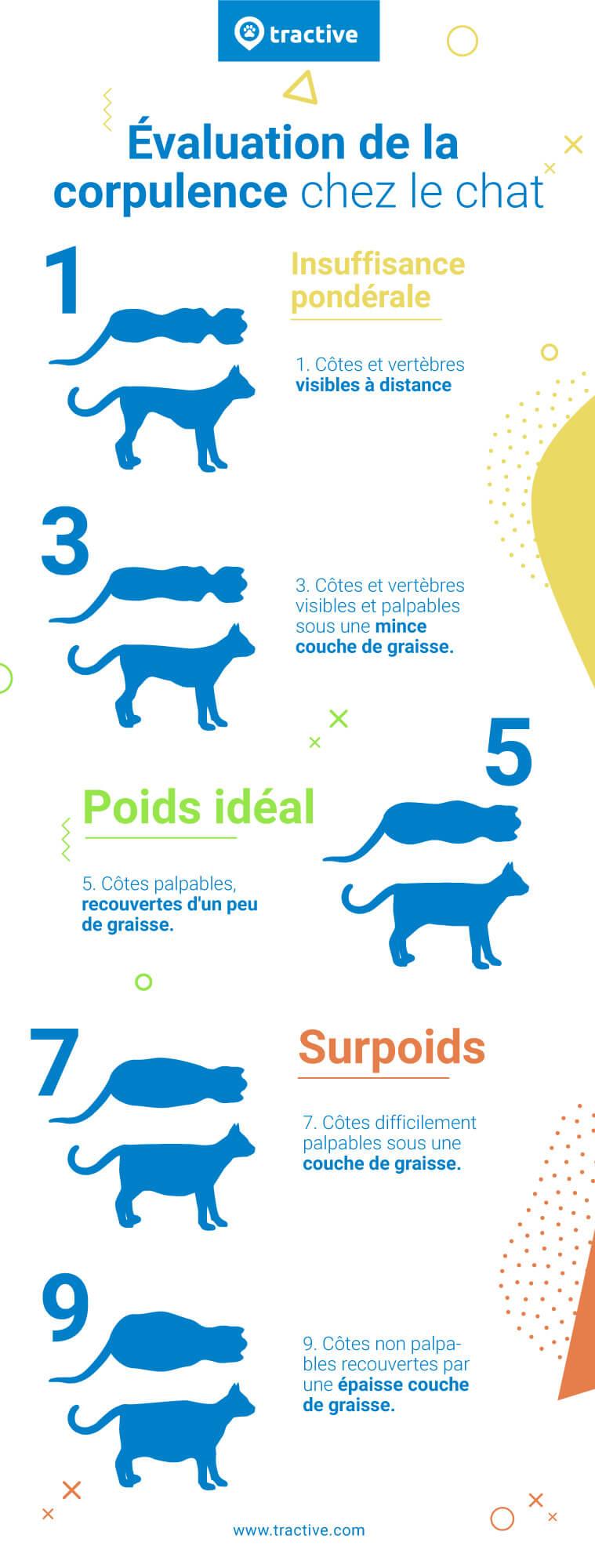 Infographie sur l'évaluation de la corpulence chez le chat
