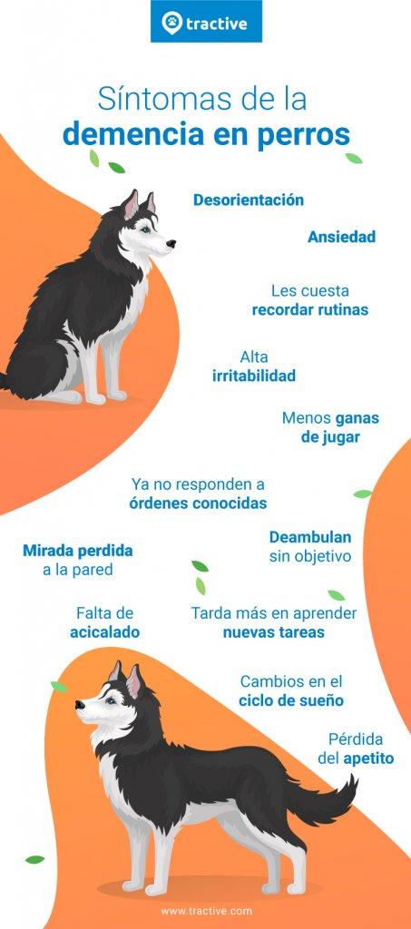Síntomas de la demencia en perros
